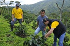 Small nespresso and fnc agronomists advising a aaa program colombian farmer