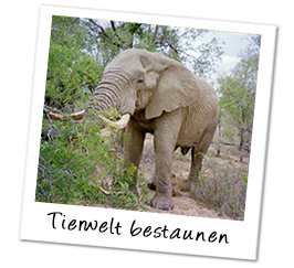 Polaroid afrika elefant